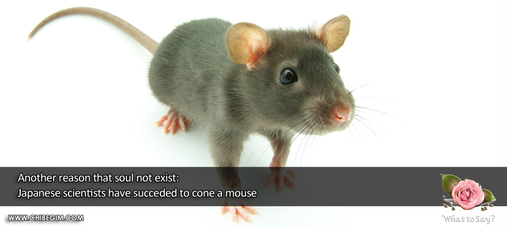 Another reason that soul not exist: Japanese scientists have succeded to cone a mouse