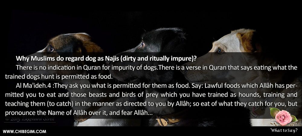 Why Muslims do regard dog as Najis (dirty and ritually impure)? 	There is no indication in Quran for impurity of dogs.There is a verse in Quran that says eating what the trained dogs hunt is permitted as food. 	Al Ma'ideh.4 :They ask you what is permitted for them as food. Say: Lawful foods which Allâh has permitted you to eat and those beasts and birds of prey which you have trained as hounds, training and      teaching them (to catch) in the manner as directed to you by Allâh; so eat of what they catch for you, but pronounce the Name of Allâh over it, and fear Allâh...