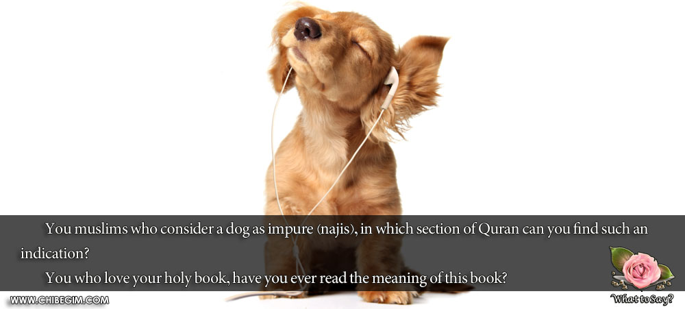 You muslims who consider a dog as impure (najis), in which section of Quran can you find such an indication? 	You who love your holy book, have you ever read the meaning of this book?